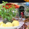 Table settings of lemons and basil.